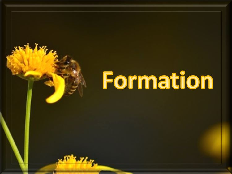 Formations / Coaching / Accompagnement individuel